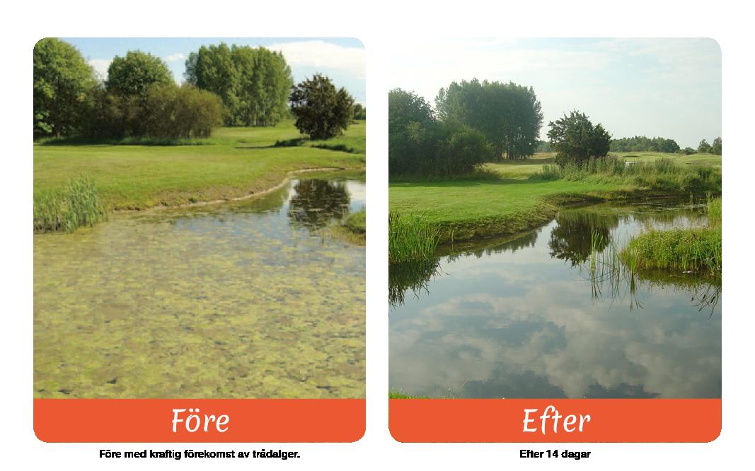 Pond Relief</br> – Biologisk bekämpning av trådalger