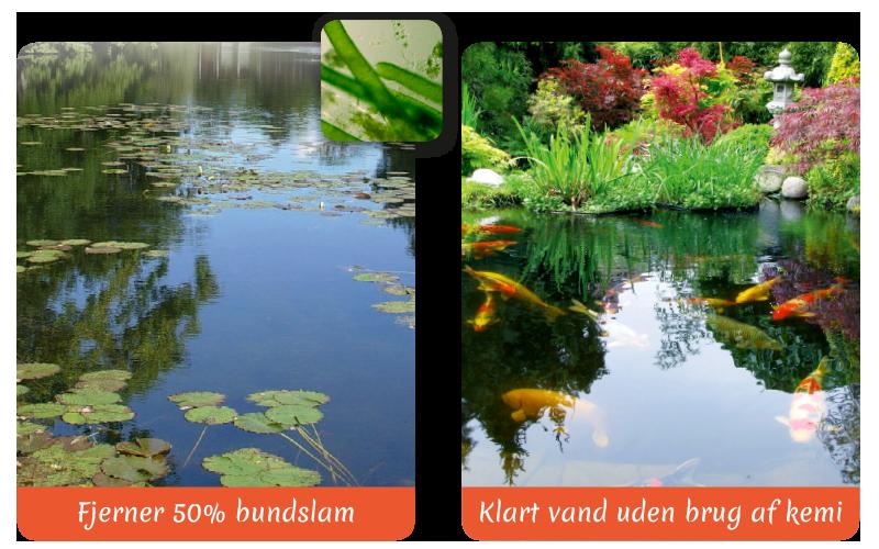 pond-clean-pos